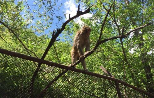 儿童节后喜迎开学,趁周末带孩子去趟八达岭野生动物园!